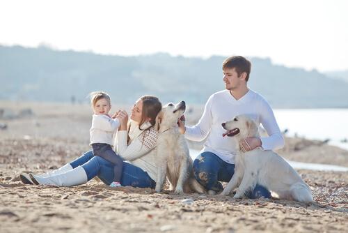 Cani con famiglia in spiaggia