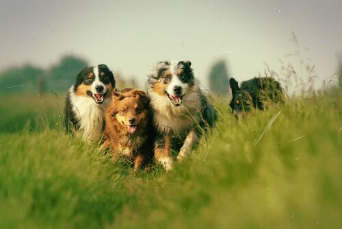 cani-in-corsa
