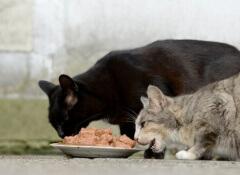 cani mangiano