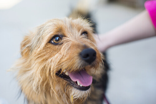 Studi indicano che i cani preferiscono le coccole alle lusinghe