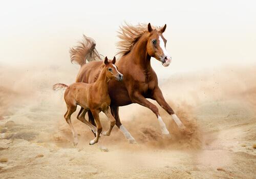 Sapete quali sono i problemi più frequenti nei cavalli?