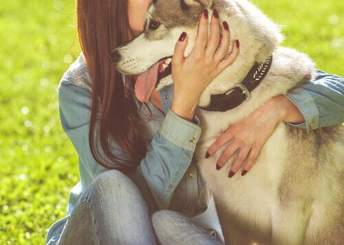 L'arte di non arrabbiarsi con il cane