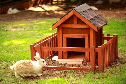Gli aspetti principali dell'igiene del coniglio