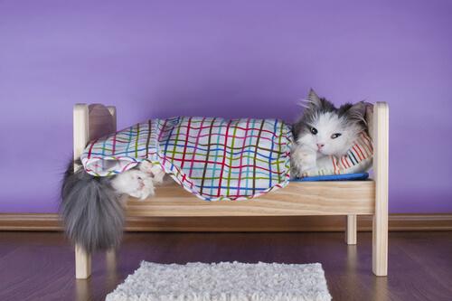 cuccia per gatto 2