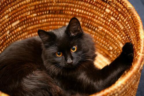 Idee fai da te: la cuccia del gatto