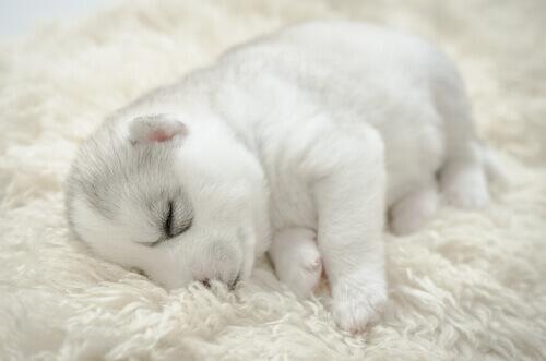Come prendersi cura di un cucciolo durante la notte