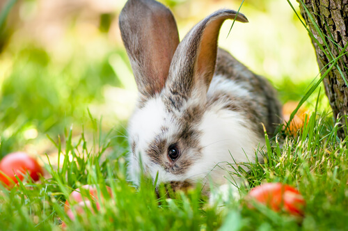 curiosità sui conigli