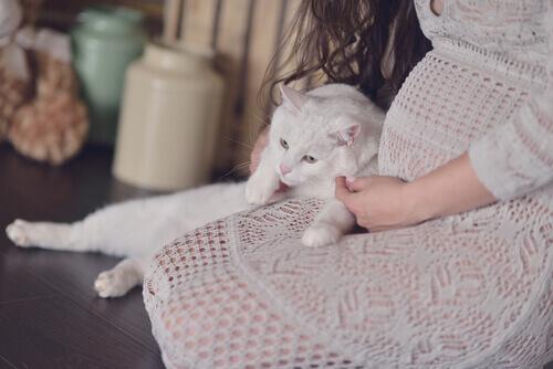 donna-incinta-gatto