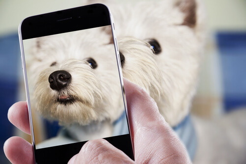 Come fare una foto al vostro animale domestico