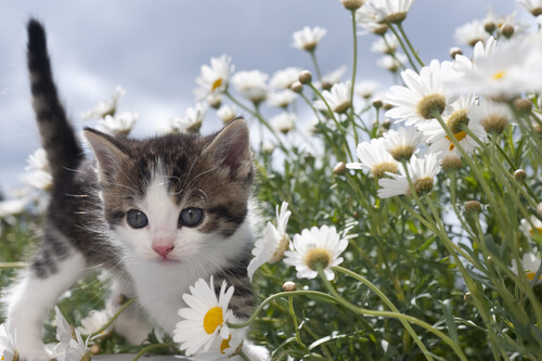 gatti-e-piante-tossiche-3
