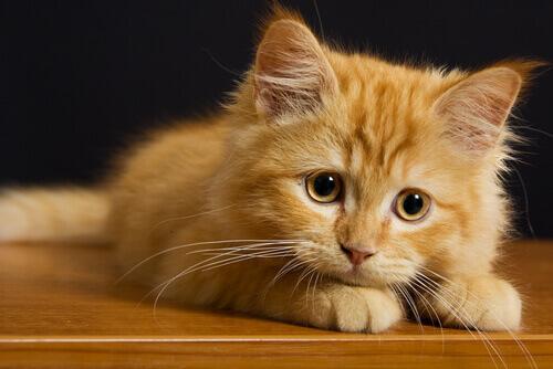 7 cose che i gatti odiano