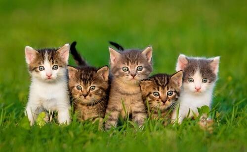 gattini sul prato