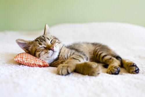 Gatti pigri: simbolo di qualche problema?