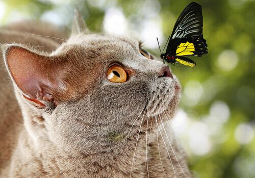 Come si misura l'intelligenza dei gatti