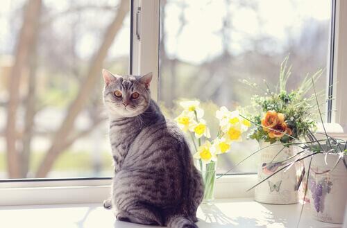Che cos'è la marcatura per i gatti?