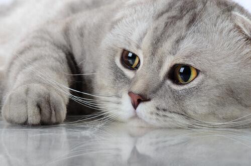gatto malato 3