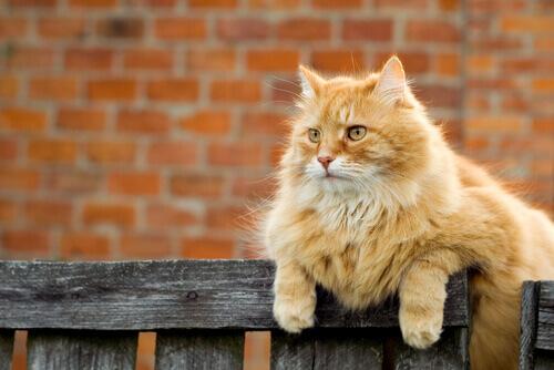 La marcatura del territorio dei gatti