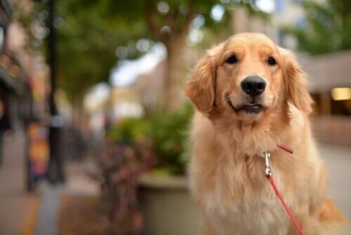 Un cane si lancia contro un autobus per proteggere la sua padrona