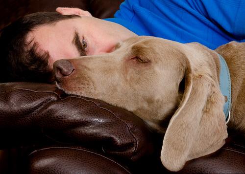 i sogni dei cani