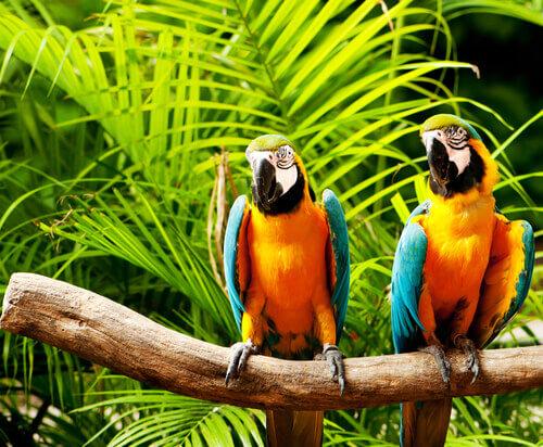 Perché i pappagalli parlano?