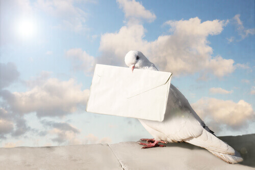 Il piccione viaggiatore, un uccello che ha fatto la storia