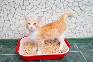 sabbia gatto