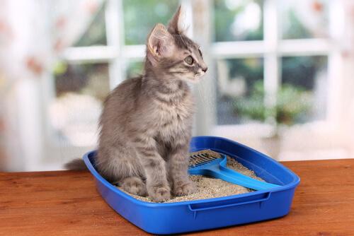 sabbia per gatti