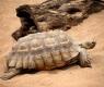 tartaruga-di-tierra