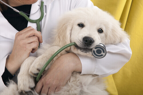 I cani e il veterinario