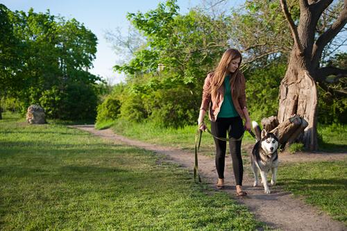 ragazza porta a passeggio husky