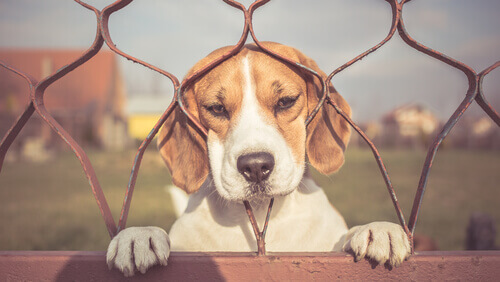 Controllare l'ansia da separazione nei cani