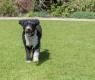cane acqua spagnolo
