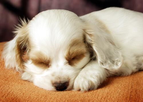cane-addormentato2