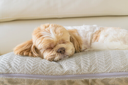 Quanto dormono i cani?