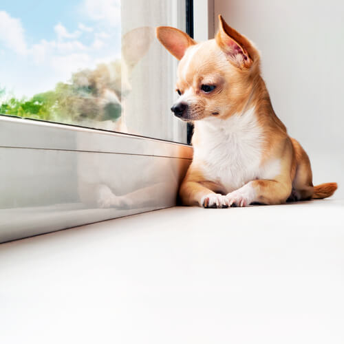 cane-finestra