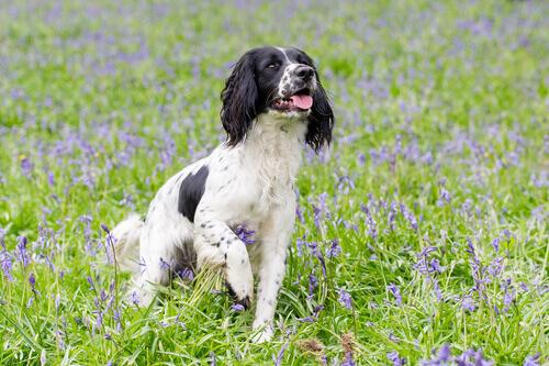 Cos'è l'aromaterapia nei cani?
