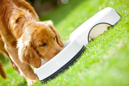 I principali disturbi intestinali dei cani