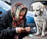 cane-mendicante