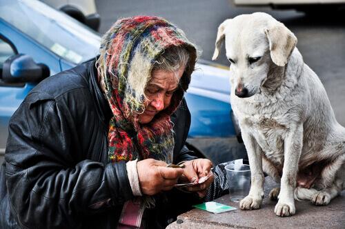 Senzatetto con animali: un problema delle grandi città