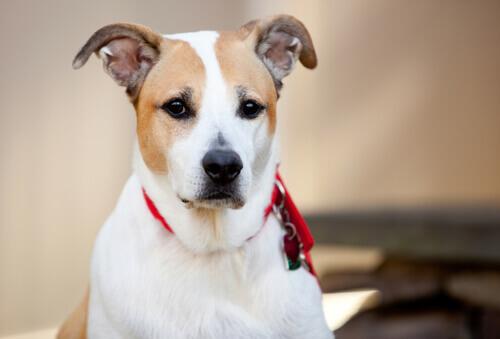 Il cane meticcio: una razza unica