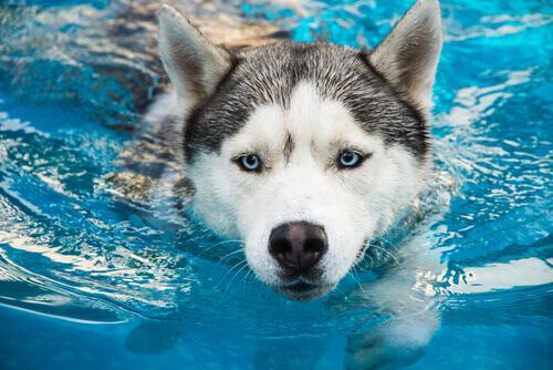 Cosa fare in caso di annegamento negli animali