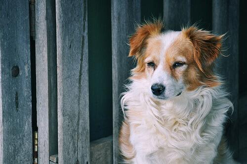 7 rimedi casalinghi per alleviare la tosse dei cani