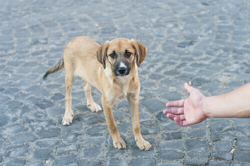 cane per strada