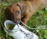 cane-scarpa