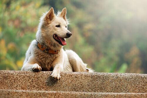 I comportamenti stereotipati dei cani