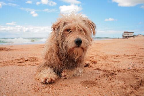 Perché i cani smuovono la terra dopo aver fatto i bisogni?