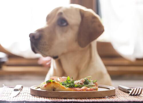 Fibre naturali per i cani, scopritene tutti i benefici