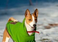 cane-vestito
