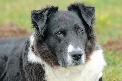 Dermatiti o irritazioni della pelle nei cani
