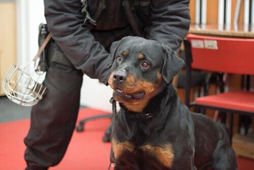 Addestramento dei cani anti-piromani